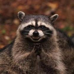evil_plotting_raccoon evil plotting raccoon meme generator