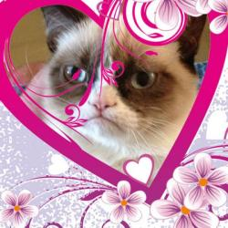 grumpy cat valentines day meme generator