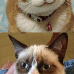 Grumpy Cat vs Happy Cat meme generator