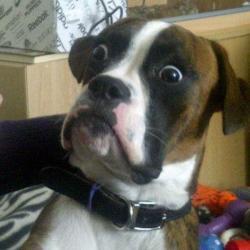 skeptical_dog.jpg