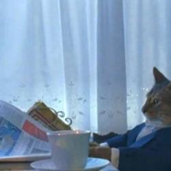 Cat Reading Newspaper Meme