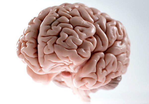 interesting facts about brain illusions and how it works